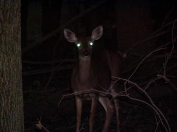 deer headlights_1